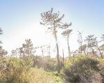 Terreno para construção em Talefe com mais de 4000m2, Praia de Quiaios, Figueira da Foz