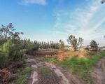 Terreno Rústico Ideal para instalações de apoio à actividade florestal, agrícola e pecuária em Moinhos de Gândara, Figueira da Foz