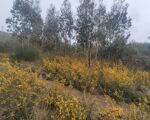 Land with 10000m2 for agricultural / forestry project 500m from the road in Sobreira, Paredes