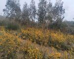 Terreno com 10000 m2 para projeto florestal /agrícola 500m da estrada na Sobreira, Paredes