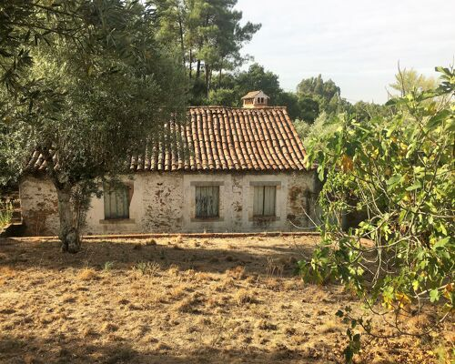 Casa Térrea para reconstrução total - Martinchel - Rio Zezere, Praia Fluvial de Aldeia do Mato