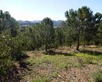 Terreno Rústico com pinheiros em S.Marcos da Serra