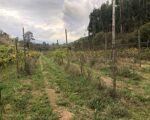 Terreno em Baião ( Grilo)sem CUSTO COM ÁGUA   com quase 3 Hectares para fins agrícolas e de construção