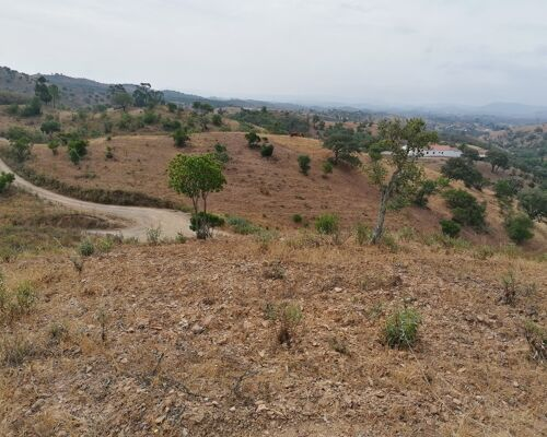 Rustic plot for agricultural project
